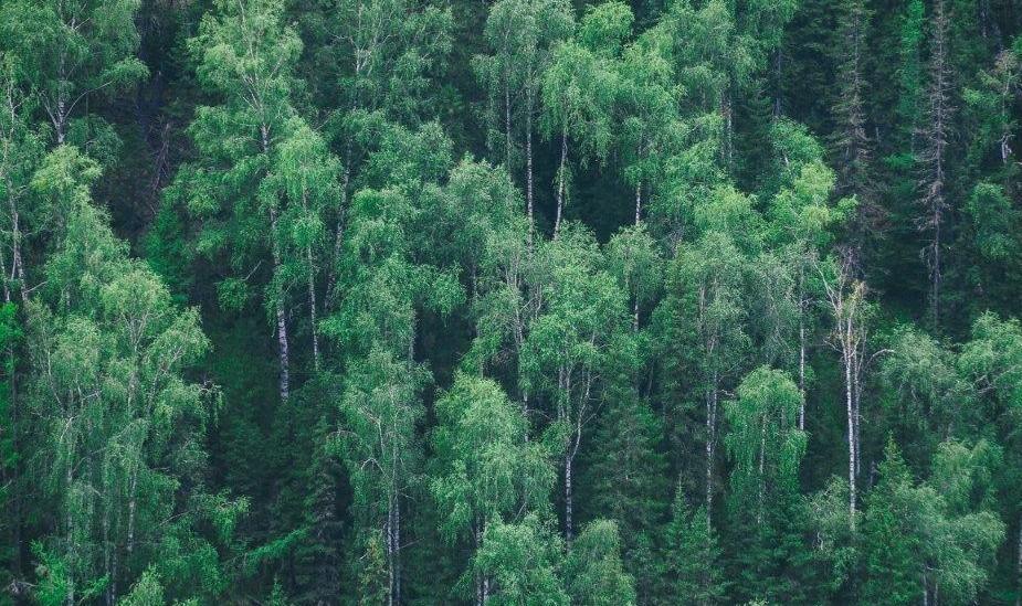 Plataforma Notícias Ordem Engenheiros Região Norte - Há Engenharia do INESC TEC e da FEUP que torna a floresta mais segura